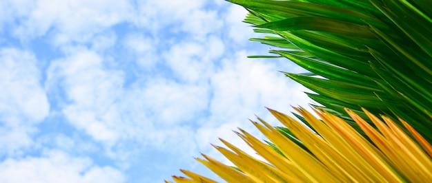Zieleń I Kolor żółty Opuszczamy W Niebieskiego Nieba Tle. Premium Zdjęcia