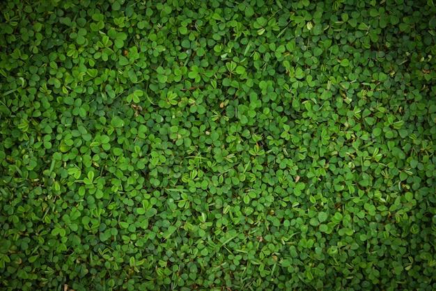 Zieleń liści tekstury powierzchni trawa odgórnego widoku małej rośliny zieleni liścia natury tło Premium Zdjęcia