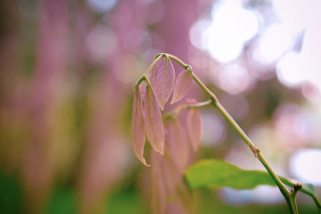 Zieleń Liście Z Bokeh światła Wiosny Natury Tapety Tłem Premium Zdjęcia