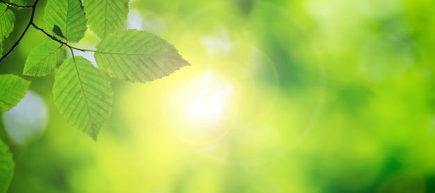 Zieleń Opuszcza Tło W Słonecznym Dniu Premium Zdjęcia