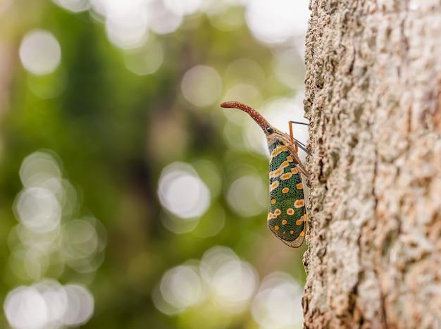Zielona Cykada Na Drzewie Premium Zdjęcia