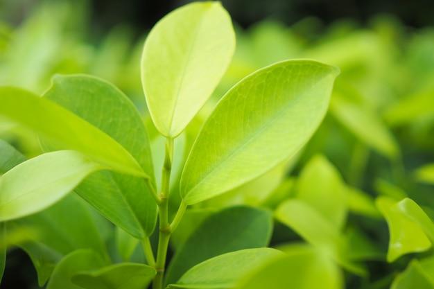 Zielona Liść Natura Na Zieleni Tle Premium Zdjęcia