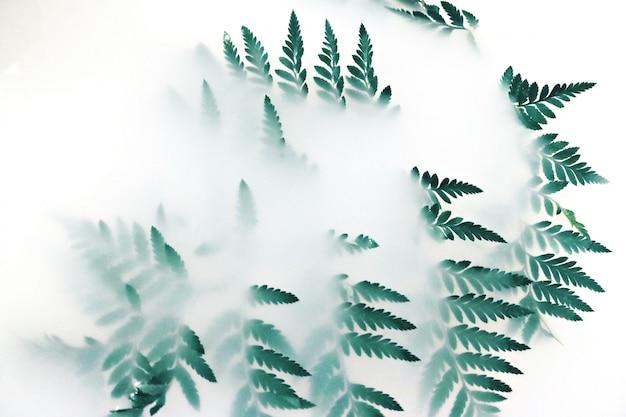 Zielona Liść Roślina Pokryta Białym Dymem Darmowe Zdjęcia