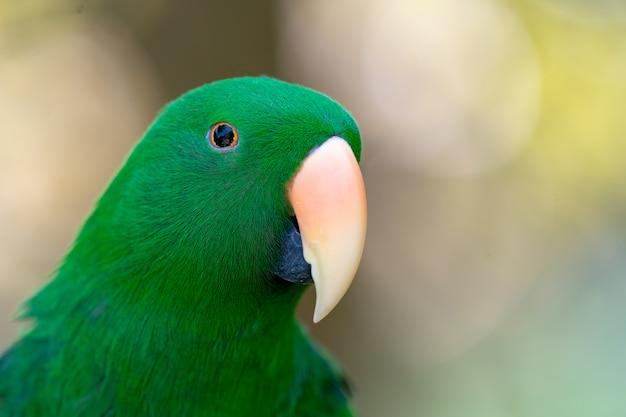 Zielona Papuga Wiesza Dalej I Stoi Na Gałąź W Lasowej Bokeh Plamie Premium Zdjęcia
