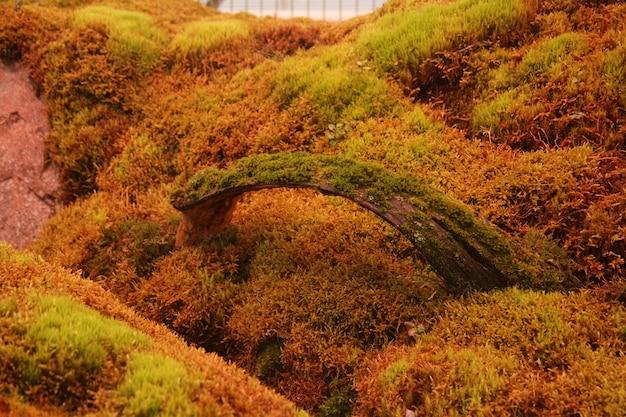 Zielona Powierzchnia Porośnięta Mchem W Ogrodzie Kwiatowym Darmowe Zdjęcia