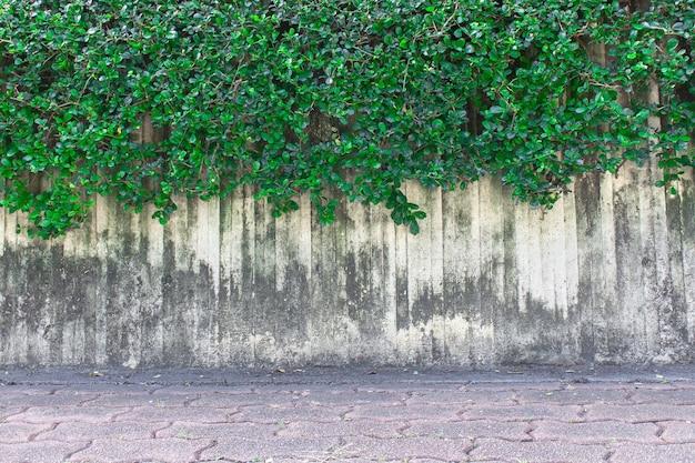 Zielona Roślina Pnącza Na ścianie Premium Zdjęcia
