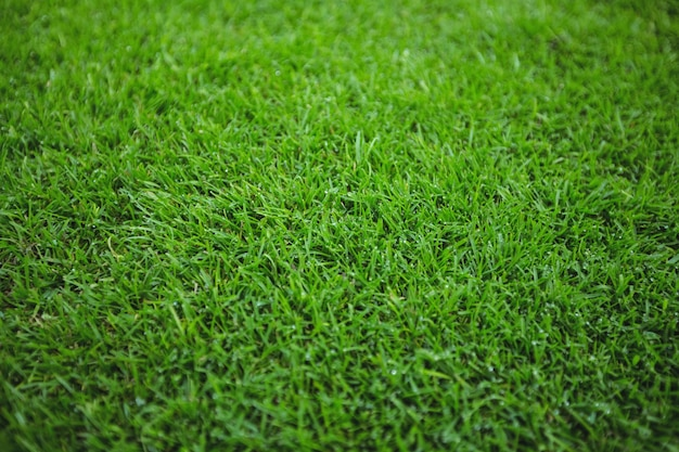 [Obrazek: zielona-trawa-pole-t%C5%82a_1252-1099.jpg]