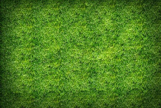 Zielona trawa tekstura tło Premium Zdjęcia