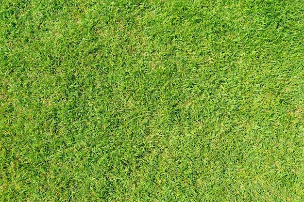 Zielona Trawa Tekstury Tła. Zielony Trawnik Wzór I Tekstura Tło. Zbliżenie. Premium Zdjęcia