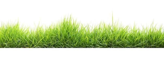 Zielona Trawa W Ogrodzie Izolować Na Białym Tle Premium Zdjęcia
