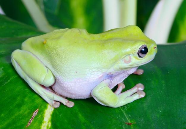 Zielona żaba Darmowe Zdjęcia