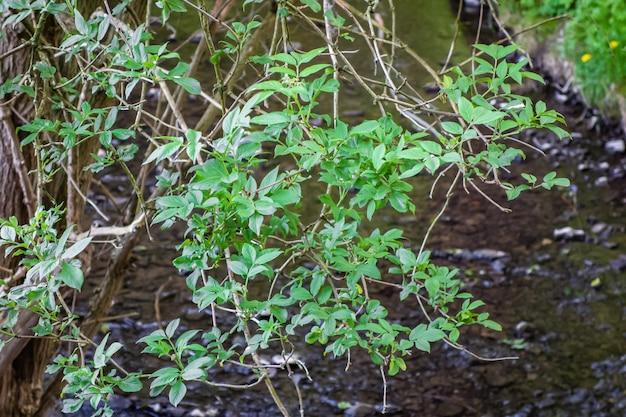 Zielone Liście Na Gałęziach Drzewa Z Rzeką Darmowe Zdjęcia