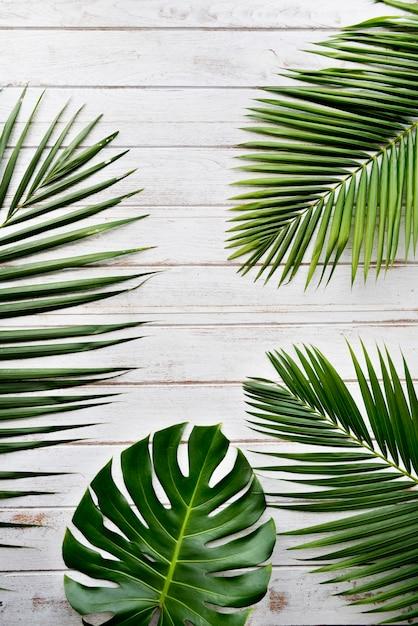 Zielone liście ozdobne Darmowe Zdjęcia