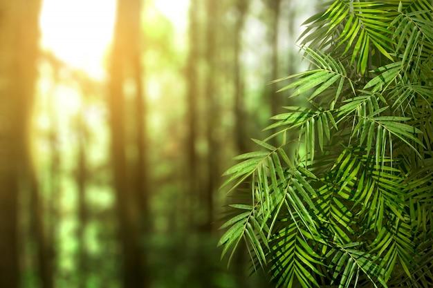 Zielone Liście Palmowe Premium Zdjęcia