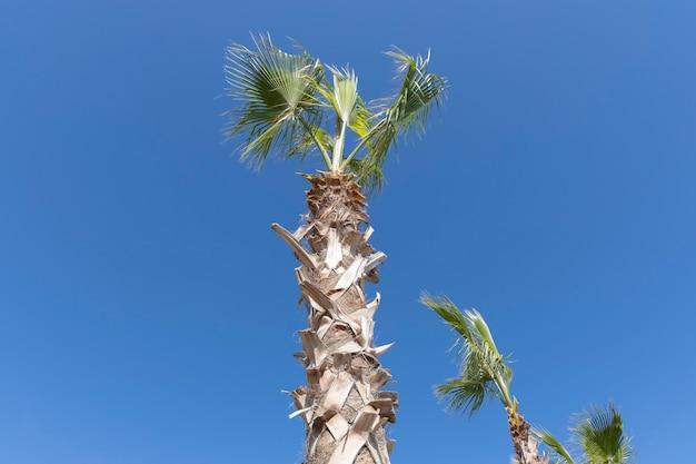 Zielone Palmy I Błękitne Niebo Premium Zdjęcia