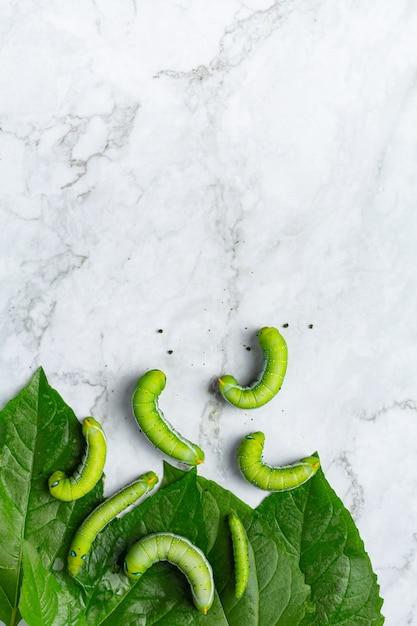 Zielone Robaki Ze świeżymi Liśćmi Na Podłodze Z Białego Marmuru Darmowe Zdjęcia