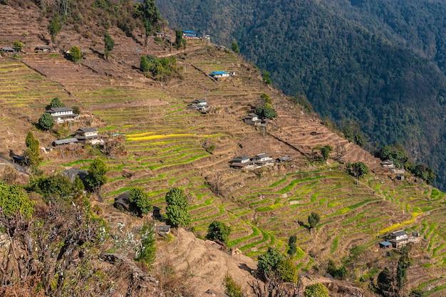 Zielone Wzgórza Z Tarasami Ryżowymi. Nepal Himalaje Premium Zdjęcia