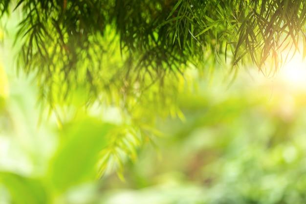 Zielony Abstrakt Plamy Natury światło Słoneczne Z Bokeh I Obiektywu Racy Skutkiem Dla Tła Premium Zdjęcia