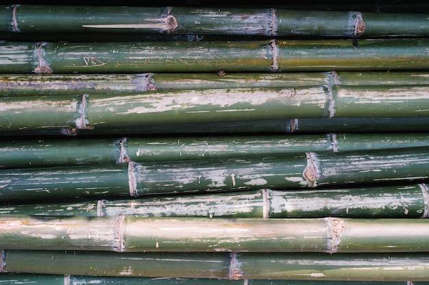 Zielony bambus Darmowe Zdjęcia