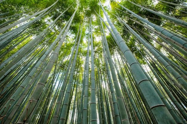 Zielony Bambusowy Gaju Las Z światłem Słonecznym Premium Zdjęcia
