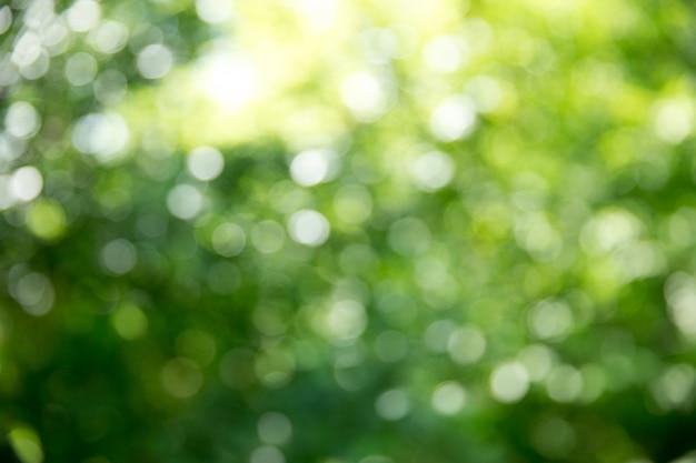Zielony Bokeh Z Promieniami Słonecznymi Premium Zdjęcia
