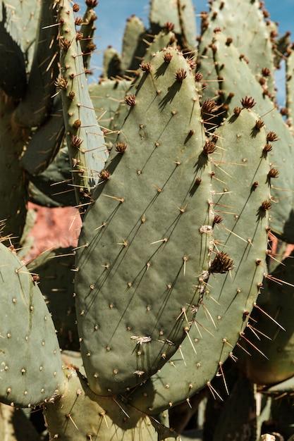 Zielony Kaktus, Podróżuj Po Pustyni, Egzotyczna Roślina Premium Zdjęcia