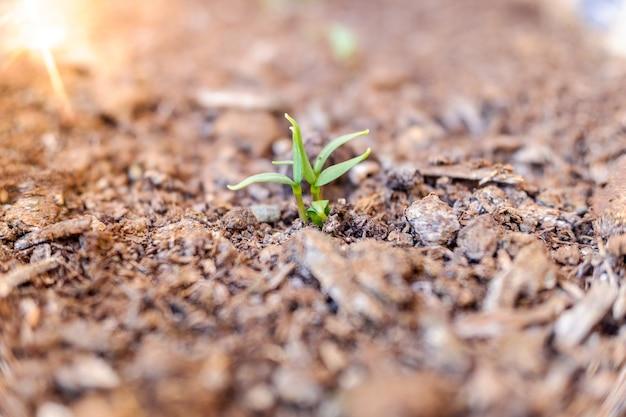 Zielony Kiełek Rośliny Na Plantacji Premium Zdjęcia