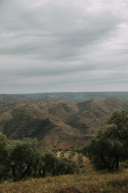 Zielony Krajobraz Z Dużą Ilością Zielonych Drzew I Gór Pod Burzowymi Chmurami Darmowe Zdjęcia