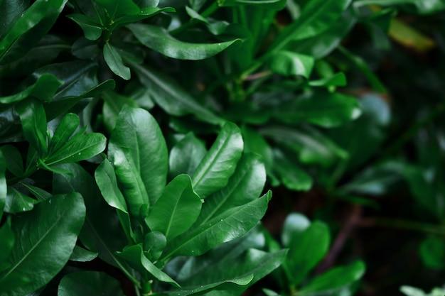 Zielony Krzew Z Liśćmi W Zielonym Motywie Premium Zdjęcia