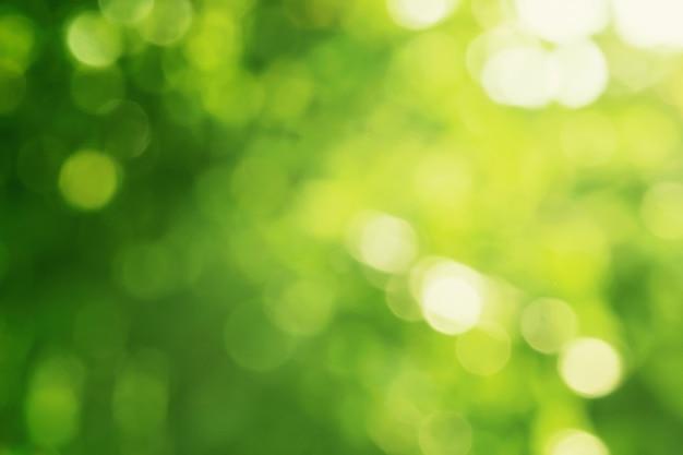 Zielony Liść Rozmycie Z Tłem Słońca Premium Zdjęcia