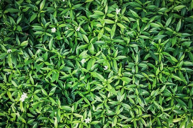 Zielony Liść Tło. Darmowe Zdjęcia