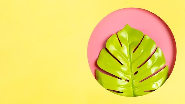 Zielony liść w ramce z miejsca kopiowania Darmowe Zdjęcia