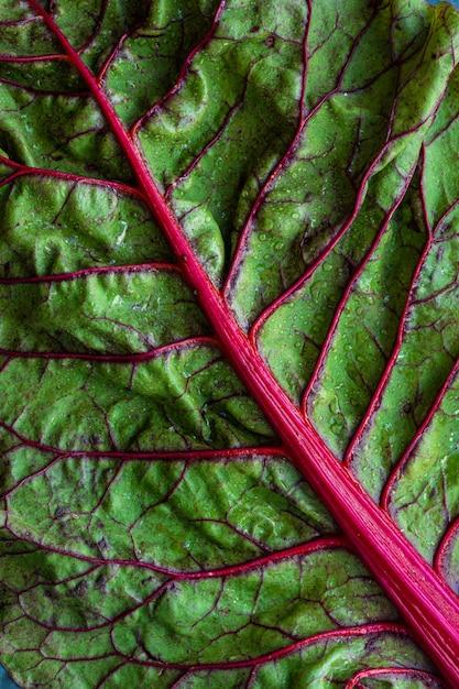 Zielony Liść Warzywny Darmowe Zdjęcia