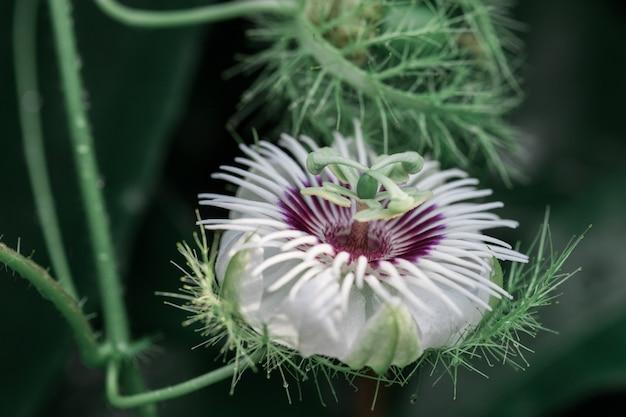 Zielony Motyl Z Kwiatami Premium Zdjęcia