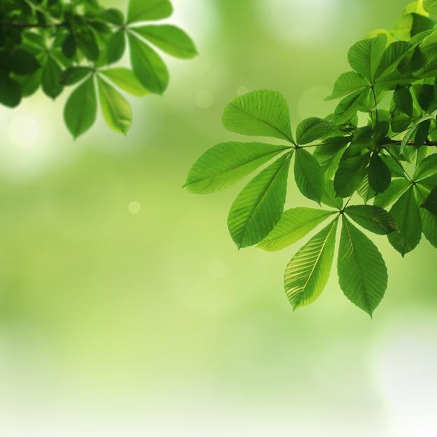 Zielony naturalny tło, zieleni tło Premium Zdjęcia