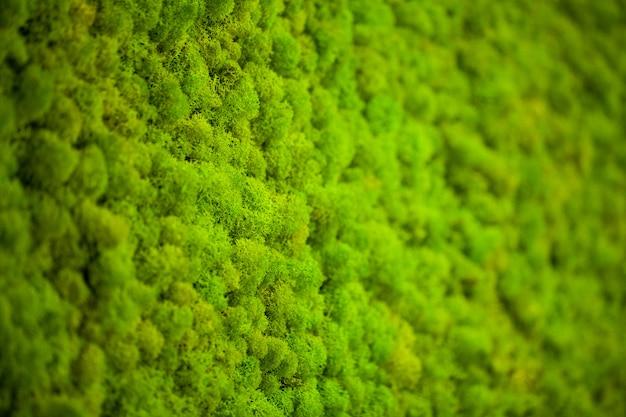 Zielony porost, tło ściany moss Premium Zdjęcia