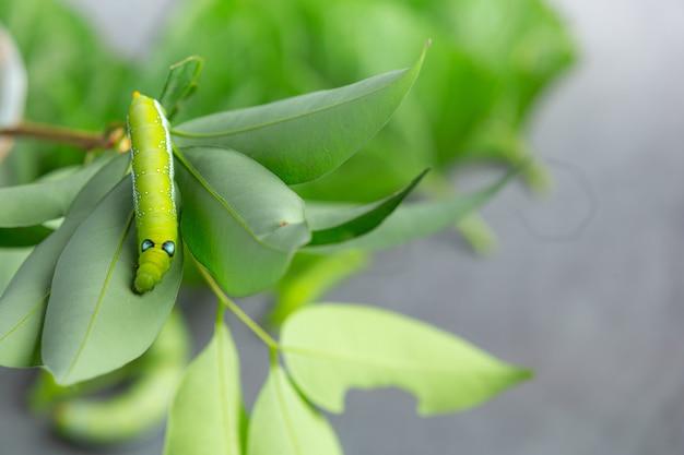 Zielony Robak Na świeżych Liściach Darmowe Zdjęcia