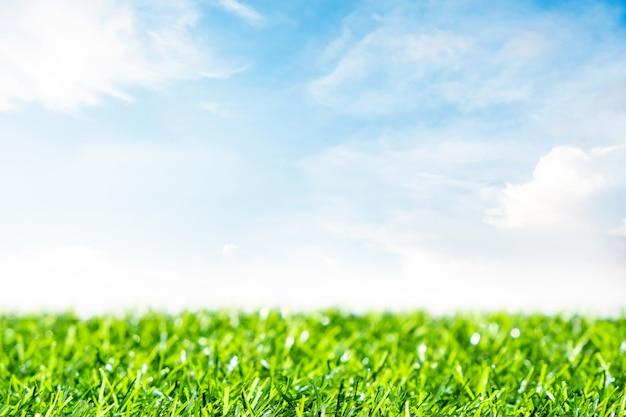 Zielony trawnik z niebieskim niebem. wiosna krajobraz w słonecznym dniu. Premium Zdjęcia