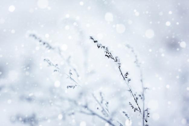 Zima Natura Tło. Zimowy Krajobraz. Premium Zdjęcia