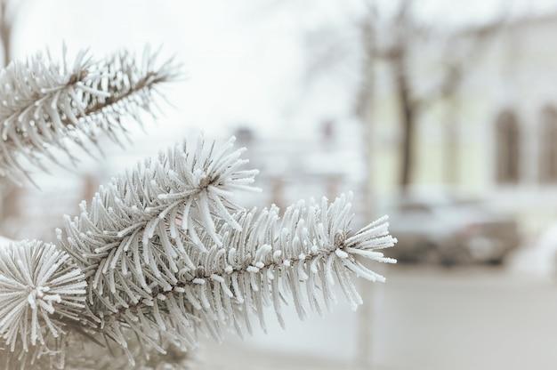 Zima w mieście, świerkowa gałąź w szronowym zbliżeniu, zamazany miasto Premium Zdjęcia
