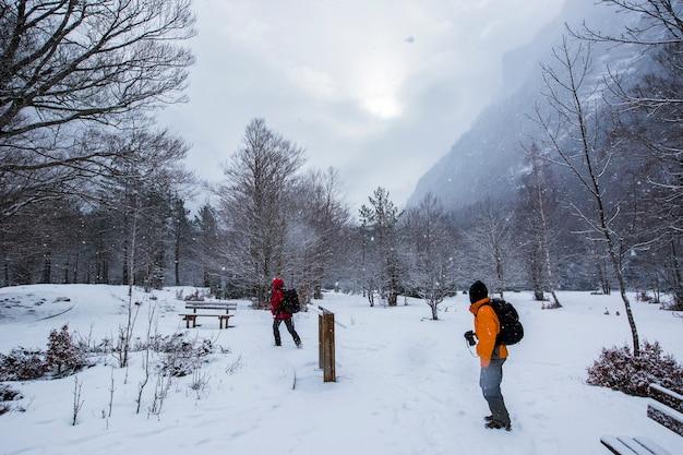 Zima W Parku Narodowym, Pireneje, Hiszpania Premium Zdjęcia