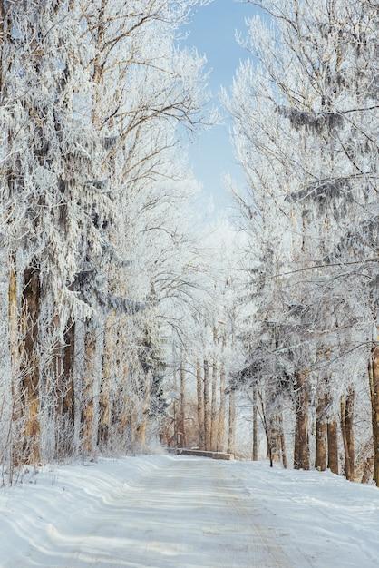 Zimowa droga. scena dramatyczna. karpackie, ukraina, europa. Premium Zdjęcia