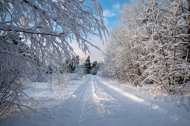 Zimowy Krajobraz Wieczorem. Droga W Lesie. Dryfuje. Zimno Premium Zdjęcia