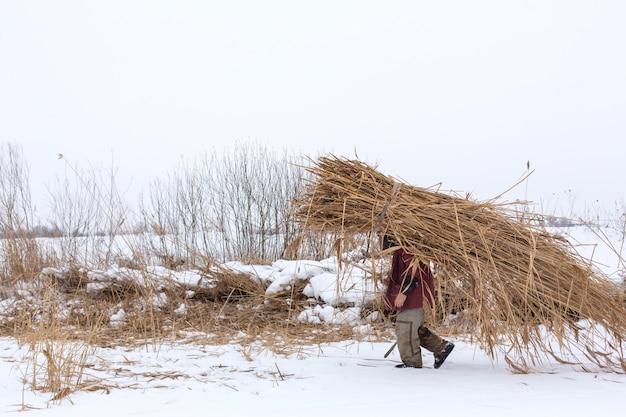 Zimowy. Mężczyzna Idzie Przez śnieg, Niosąc Na Plecach Ogromną Paczkę Suchych Trzcin Premium Zdjęcia