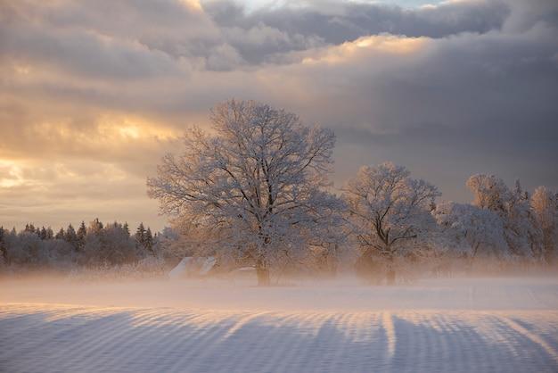 Zimowy Poranek Krajobraz W Krimulda, łotwa Premium Zdjęcia