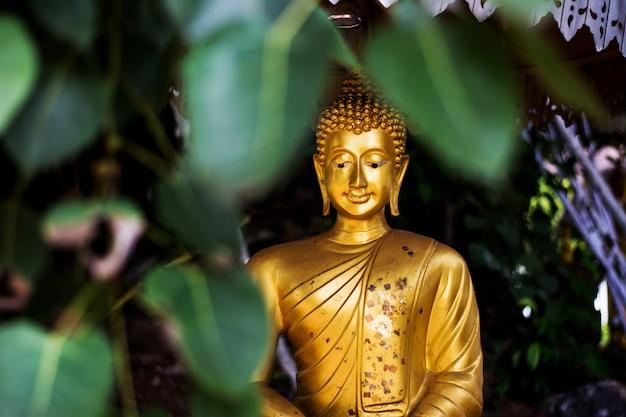 Złota Buddha Statua Pod Drzewem Premium Zdjęcia