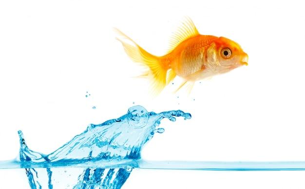 Złote Małe Ryby Wyskakują Z Wody. Premium Zdjęcia