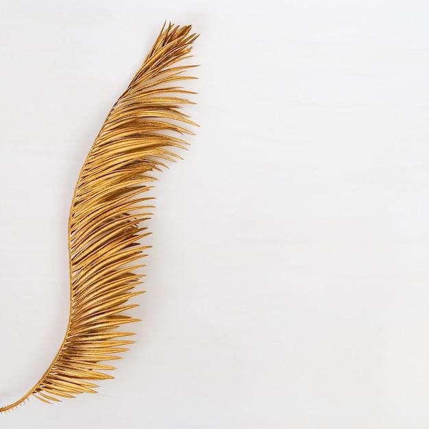 Złoty liść palmy. malowane rośliny metalowe. kreatywnie lata tło z kopii przestrzenią. Premium Zdjęcia