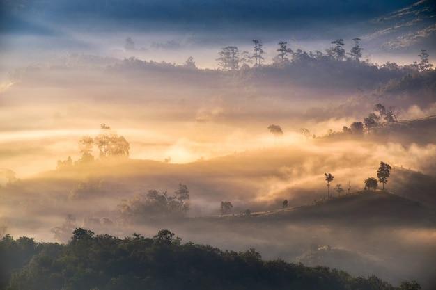 Złoty Mgłowy światło Słoneczne Na Wzgórzu W Dolinie Premium Zdjęcia