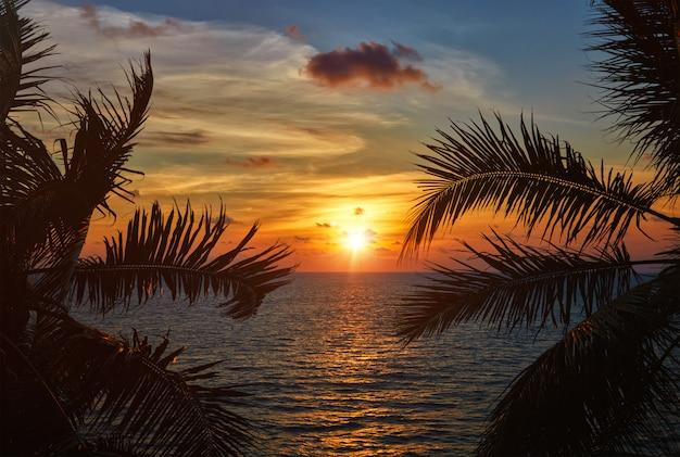 Zmierzch Oceanu Widoczny Przez Liście Palmowe Premium Zdjęcia